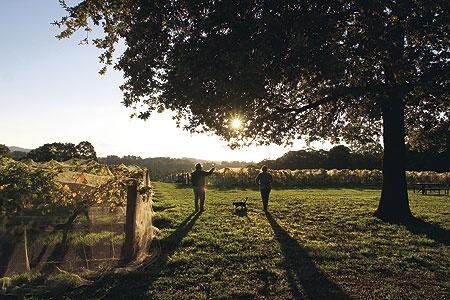Yarra Valley, Victoria
