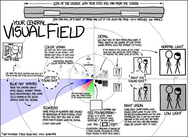 Campo visual e pontos cegos  /  Visual field and blind spots