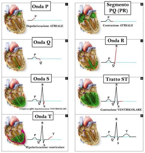 di Giulia Bulli Premessa L'elettrocardiogramma (ECG) è oggi un esame estremamente diffuso nella pratica assistenziale,coinvolgendo per l'esecuzione infermieri di tutte le unità operative. E' dunque...
