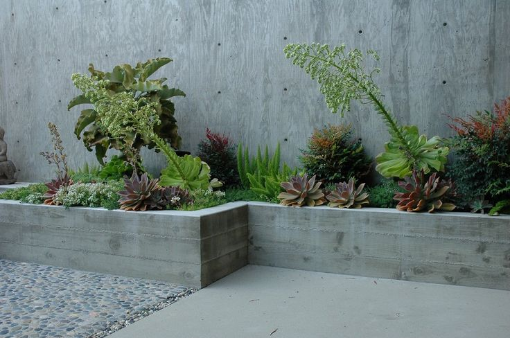 beautiful grouping of ferns, succulents and native plants ...