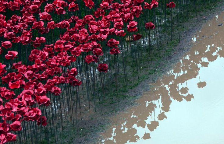 Die Blumen wurden von Spendern gekauft, an die sie nach dem Abbau des Werkes geschickt werden sollen. Der Erlös geht an Hilfsorganisationen für Militärangehörige.