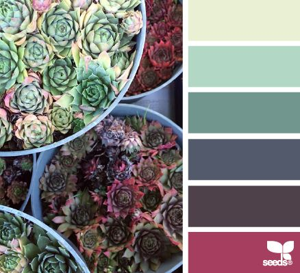 succulent spectrum | design seeds