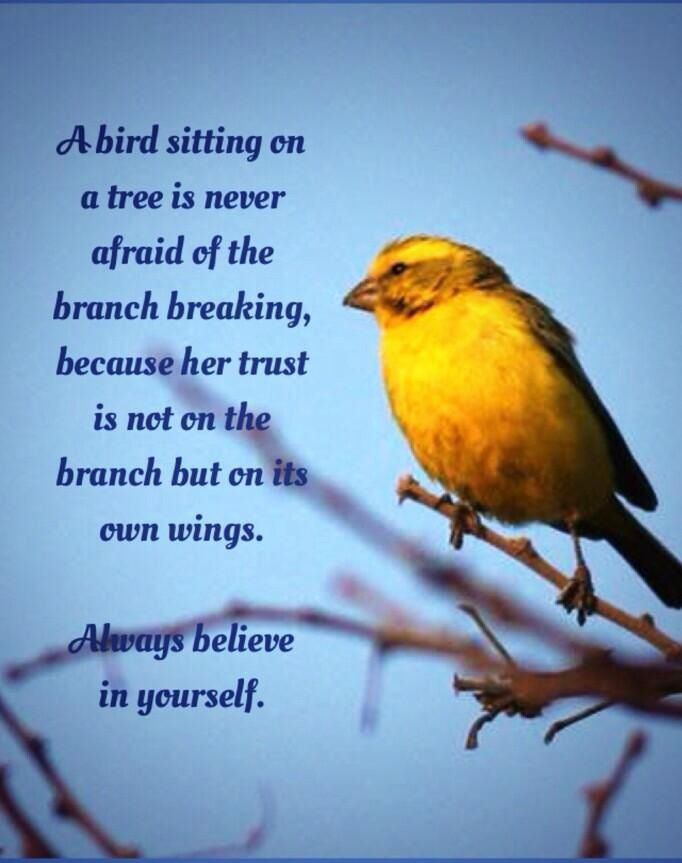 Image result for quote a bird sitting on a tree