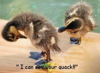 Quack! Pretty sure this really made me laugh out loud! Way too