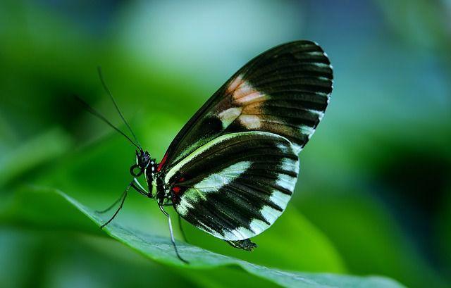 Taman Kupu-kupu (Bali Butterfly Park) - Obyek Wisata di Tabanan