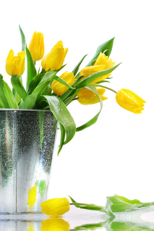 Tube bouquet de tulipes jaunes