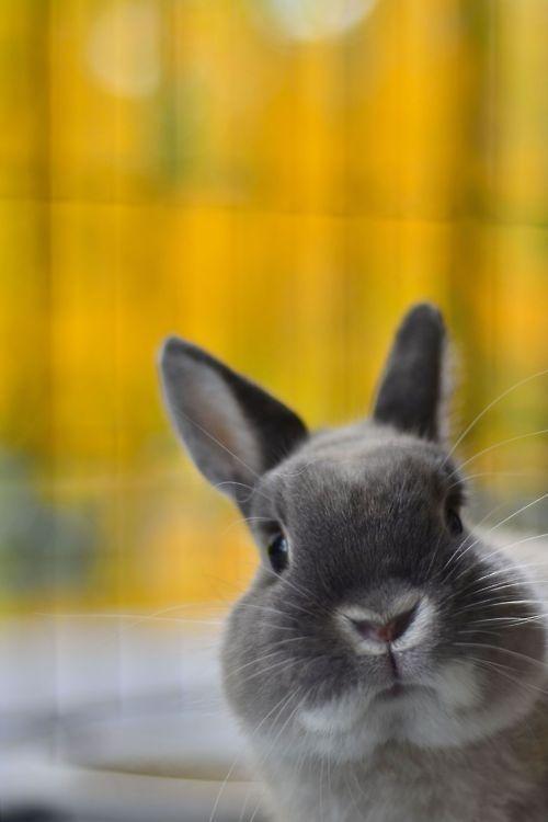 Hello, hello little grey bunny beautiful :) (via   Four legged stealers of the Heart)