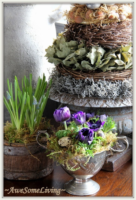 ~AweSomeLiving~Easter, You, Deze Bloemen, Pasqu Flower,  Flowerpot