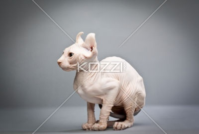 wrinkly cat -: Cat Stockings, Wrink Cat