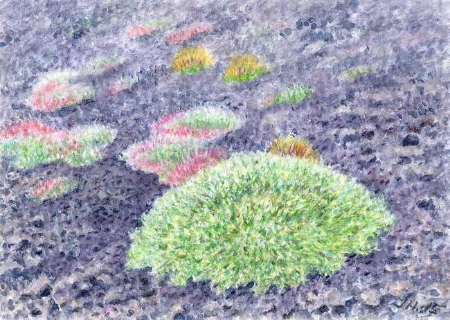 Plants on lava - Saponaria and Astragalus on Etna. Watercolor and pastel by Jana Haasová