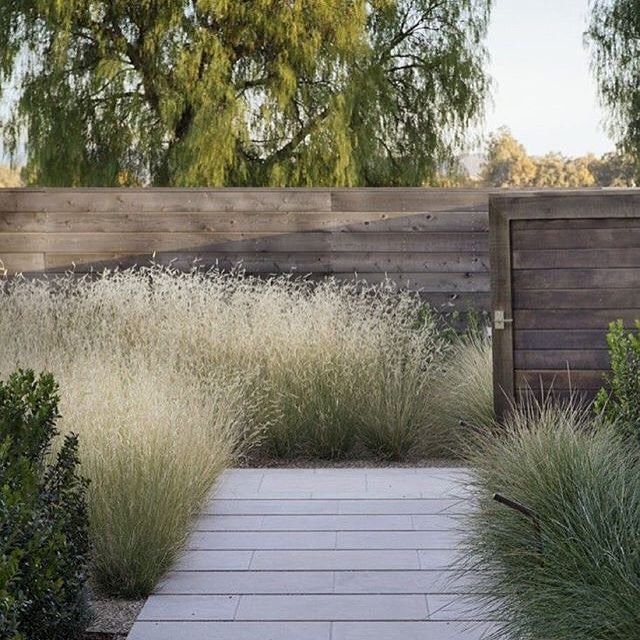 Napa Valley garden w/Bouteloua 'Blonde Ambition' by designer Scott Lewis