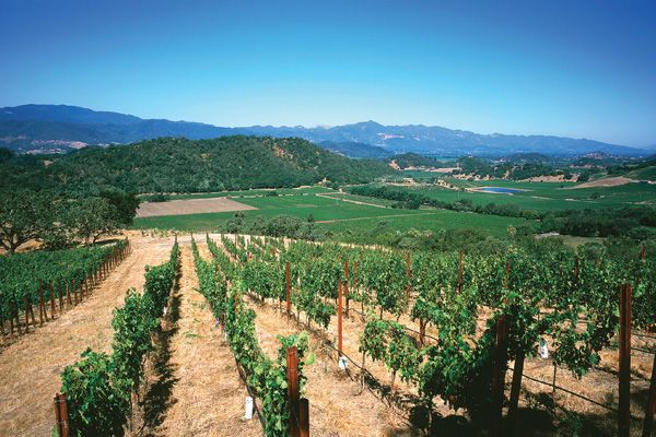 Stags' Leap Winery in Napa Valley, CA | #vineyards #winery #napavalley #stagsleap #california #wine