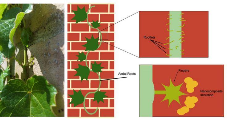 New blog post! Ivy League Nanoparticles