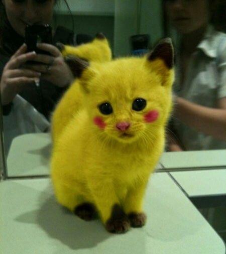 A real pokemon pikachu!!!