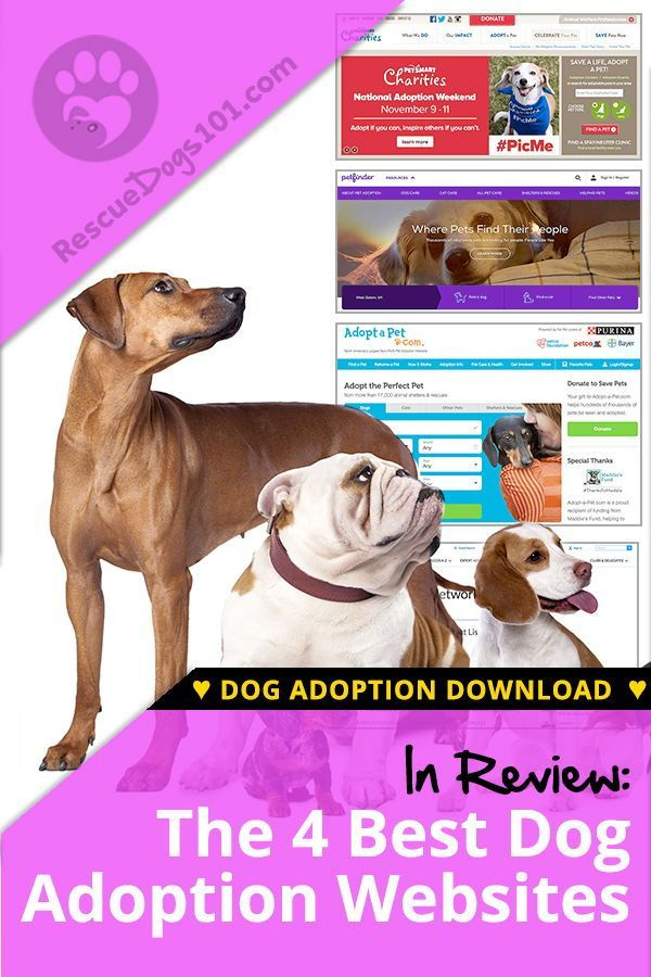 The 4 Best Adoption Websites For Dogs Dog Adoption Pet Mom Dogs