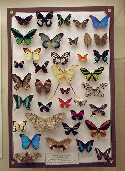 paper butterfly collection