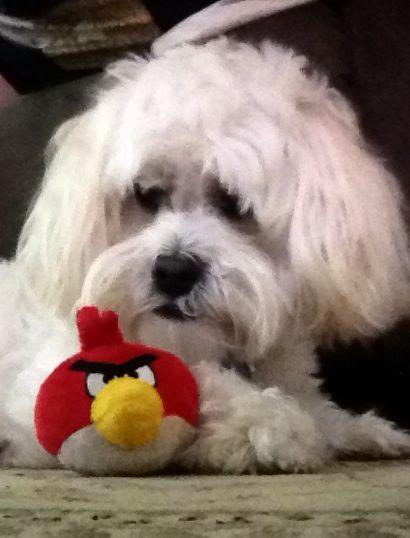 Angry bird ....