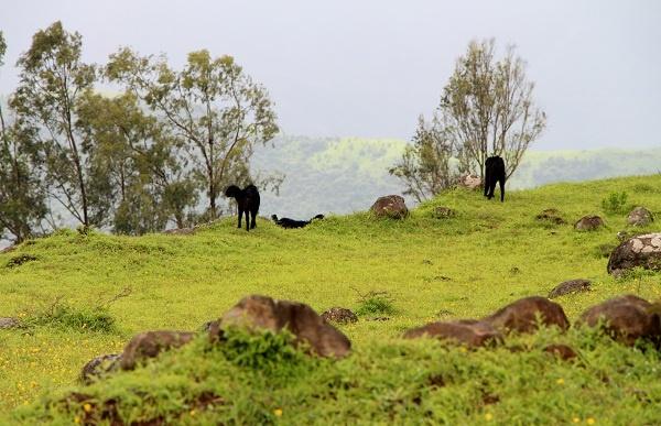 Kaas, India