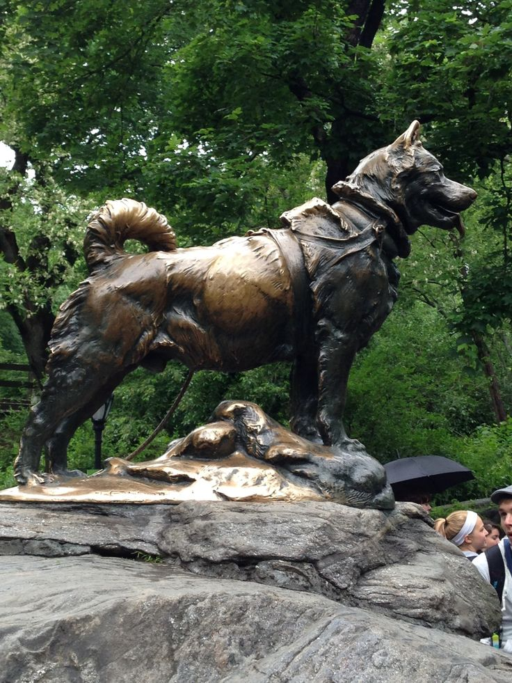 Balto Statue in New York, NY Famous dogs, Urban dog, Dog