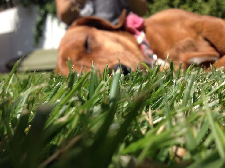 #grass #dog