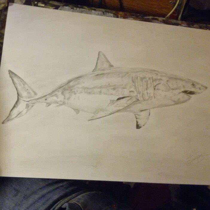 6th drawing a new shark #art #artist #animal #fineart  #shark #requin #pencil #drawing