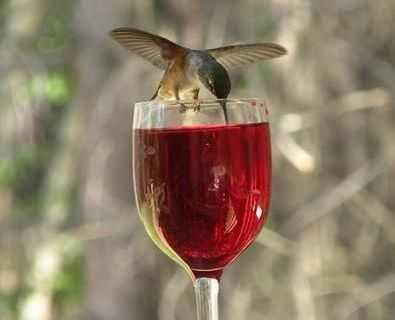 PetsLady's Pick: Beautiful Wining Hummingbird Of The Day ... see more at PetsLady.com ... The FUN site for Animal Lovers