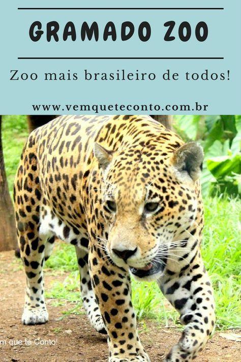 O Gramado Zoo é o Zoológico mais brasileiro do Brasil, apresentando animais exclusivamente da fauna brasileira (então, nada de girafas, leões e rinocerontes). Gramado / RS