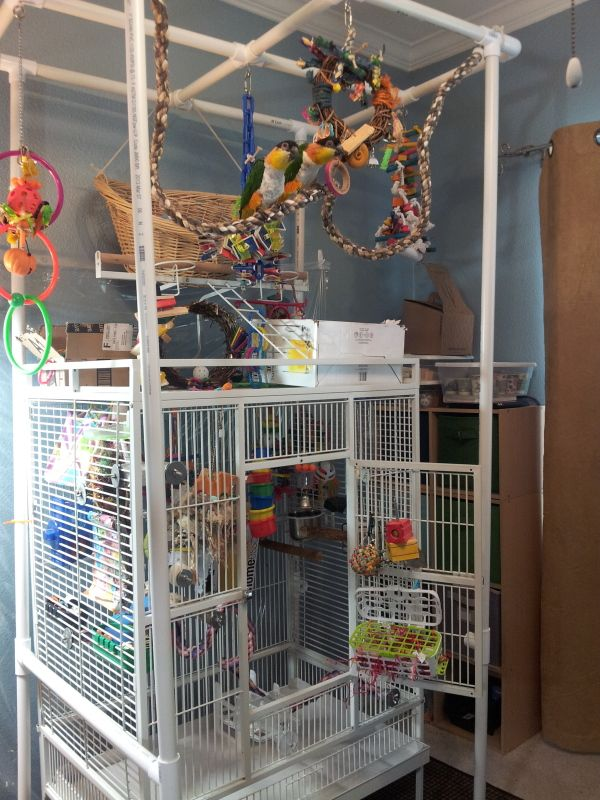 I made this for my caiques to make a playgym over their cage.