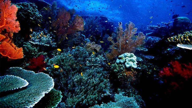 Objek Wisata Taman Nasional Bunaken Wisata Taman Laut Terpopuler
