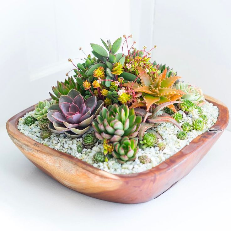 Custom Succulent Arrangement in a Sustainably Grown & Harvested Teak Wood Planter by Dalla Vita