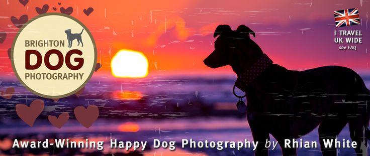 Brighton Dog Photography, Pet Photographer, Rhian White