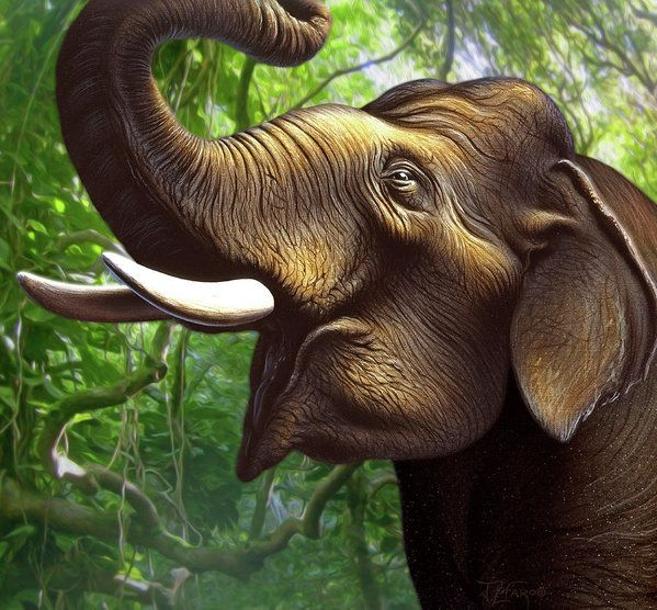 Elephant Art Print featuring the painting Indian Elephant 1 by Jerry LoFaro
