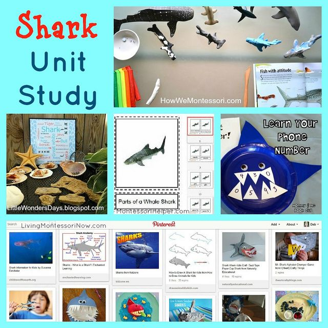 Shark - Wikipedia
