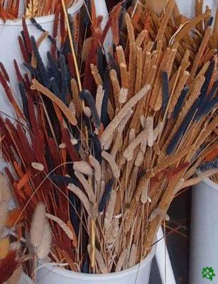 Sušina, sušené květiny a dekorace pro aranžování a floristiku