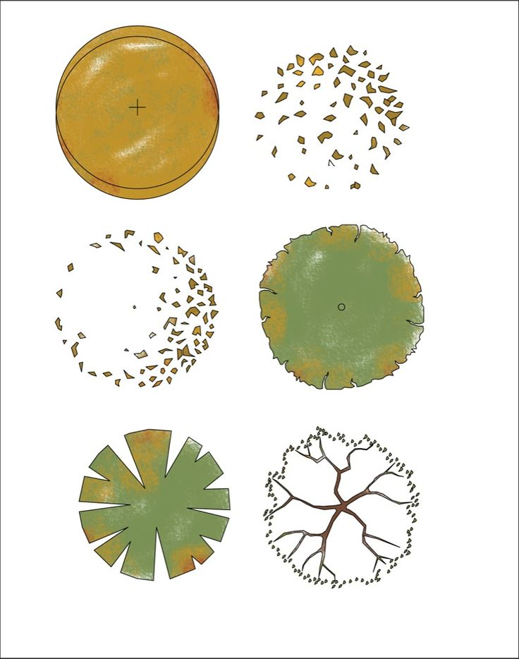 Autumn Trees in Plan - Free Download from First In Architecture