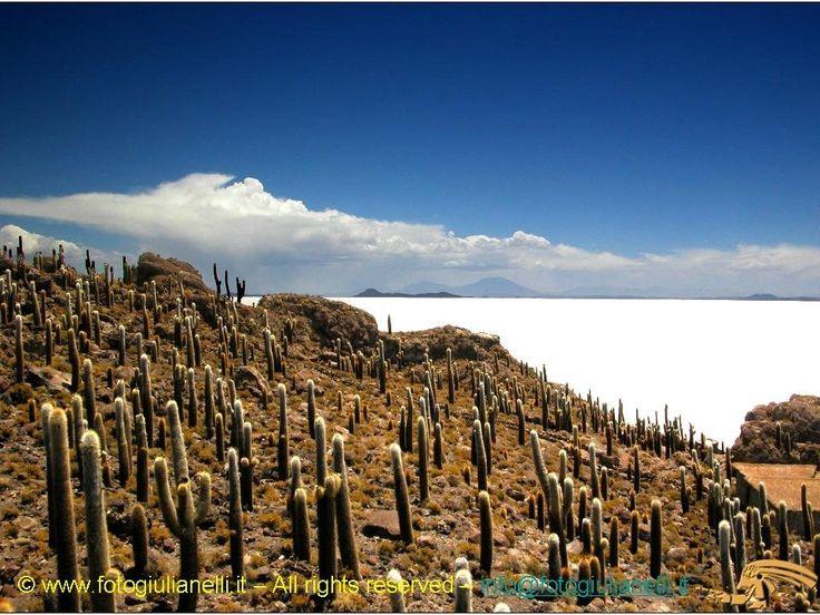 Bolivia  - El salar de Uyuni - isla incahuasi