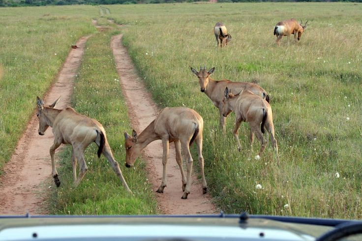 Road block on a game drive