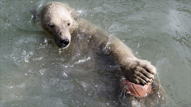 Victoria, a one-year-old polar bear cub, at the Royev Ruchey zoo in Russia's Siberian city of Krasnoyarsk on 14/4/11