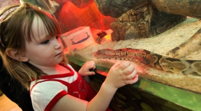 Come along to South Shields Museum & Art Gallery to meet some amazing animals at creature corner.