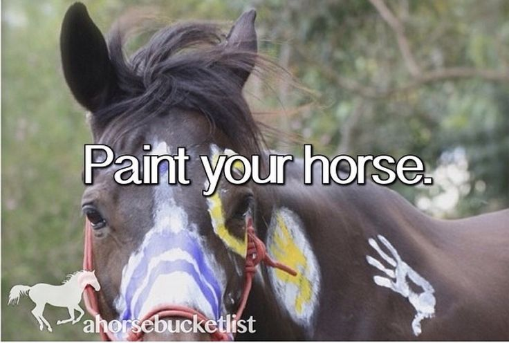 I rode a horse named Cricket last summer and on our last day riding we got to paint our horses. He was a paint horse so the colour really popped in the white areas of his coat