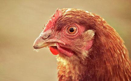 WTO is Biggest Threat to Global Progress on Animal Welfare