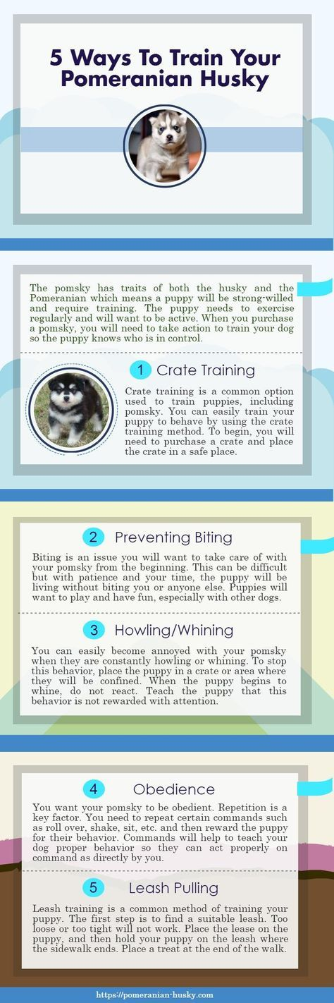 Ways to train your Pomsky Puppy. Are you looking for the information about Pomsky training? If so then this infographic will surely help you in this.