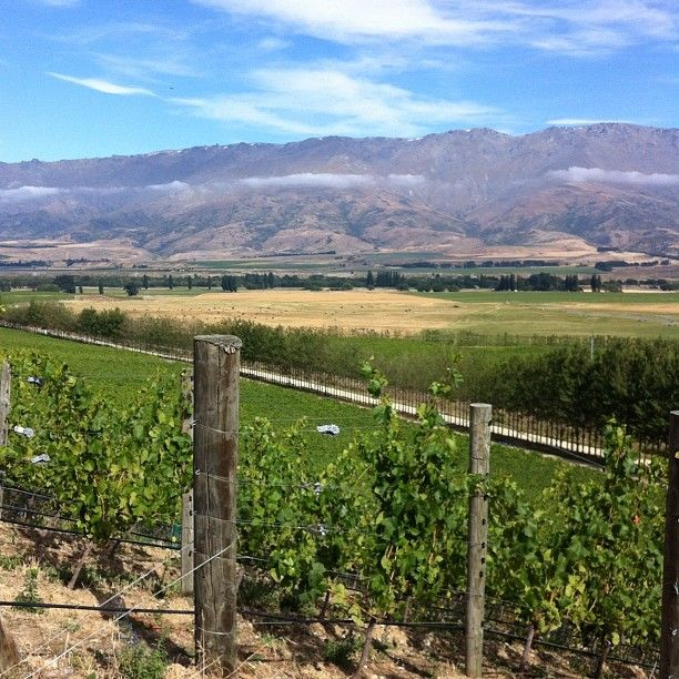 Quartz Reef vineyard, Bendigo station, NZ.