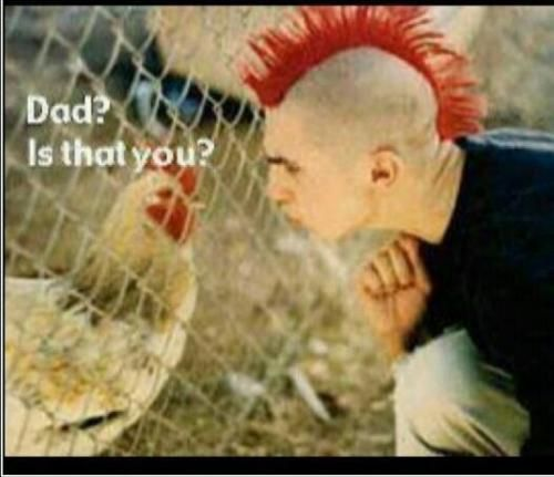 Chicken Hawk Mohawk Meme Slapcaption Com Funny Like