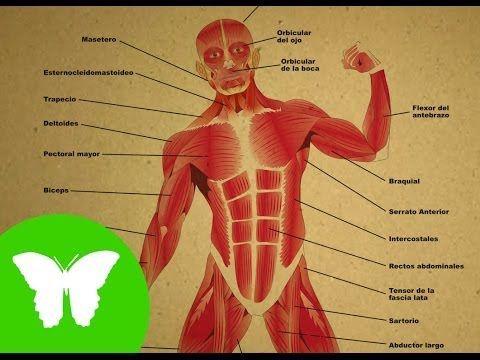 Sistemas del cuerpo humano | Alicia Llanas