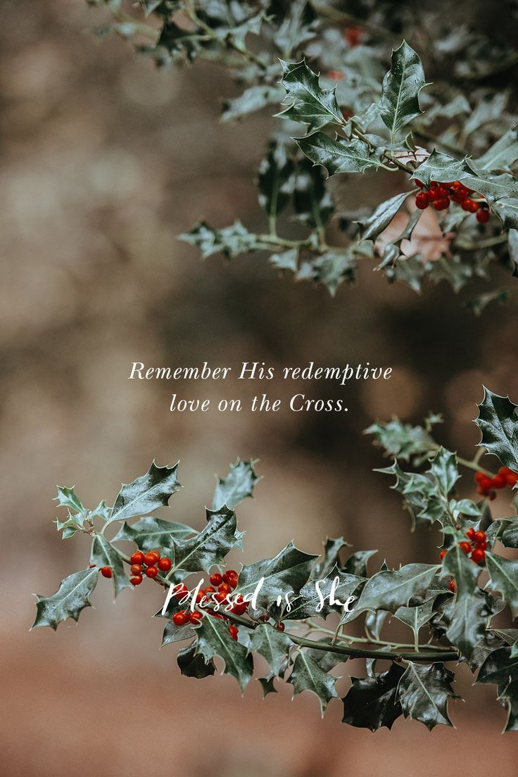 Know Your King Catholic | Woman | Women | Scripture | Daily Devotion | Daily Devotional | Daily Scripture | Catholic Woman | Catholic Women | Christian Scripture | Scriptural Devotion | Lamp and Light https://blessedisshe.net/devotion/know-your-king/
