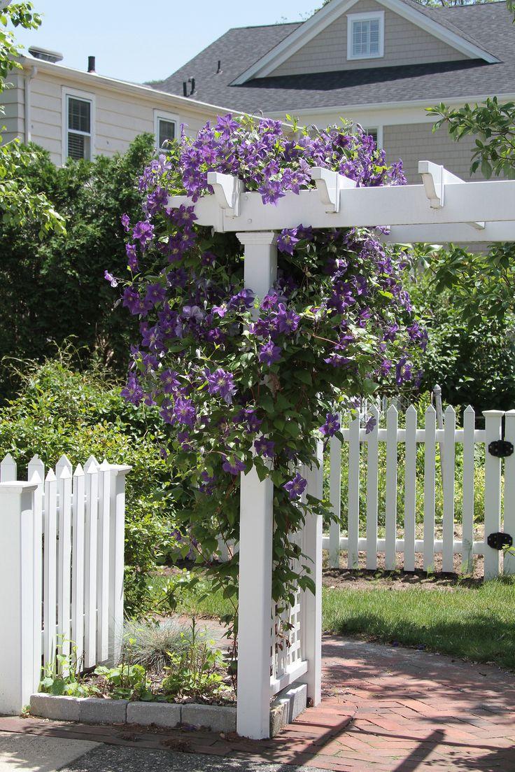 Dress Up A Garden Trellis With The Low Maintenance Climbing Perennial  Clematis.