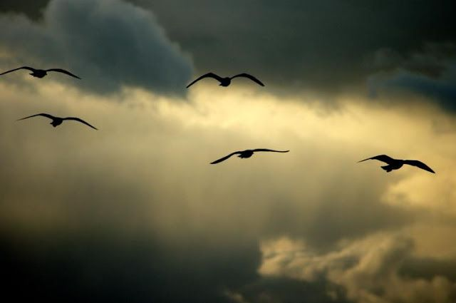 IMAGENS753: Pássaros-liberdade-paisagem