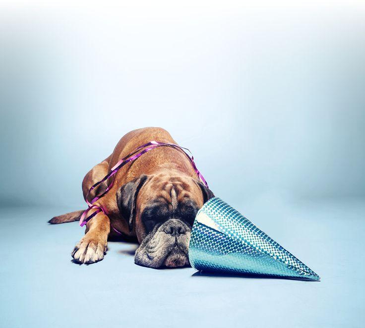 Snart nyår igen … Tips för dig som har en skotträdd hund