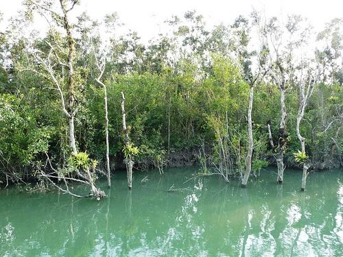 El Parque Nacional de #Sundarbans se extiende a través del estado de Bengala Occidental, en la #India, ocupando parte de la República Popular de #Bangladesh e integrando el bosque de manglar más grande del planeta, declarado Patrimonio de la Humanidad por la Unesco. La reserva abarca bosques pantanosos de agua dulce, manglares costeros e islas de marisma de gran diversidad biológica.